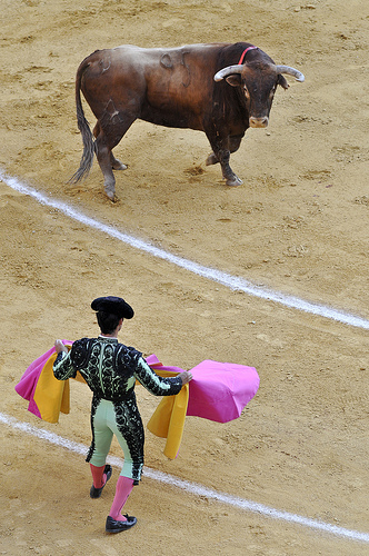 Bullfight